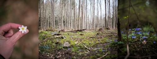 Vår i skogen